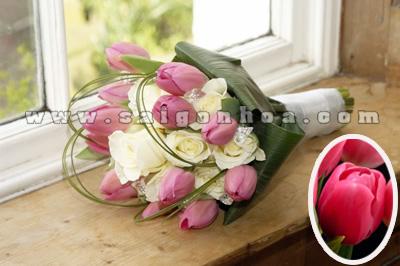 bo hoa tulip mau hong 2
