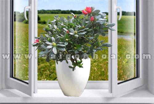chau hoa do quyen de ban 3