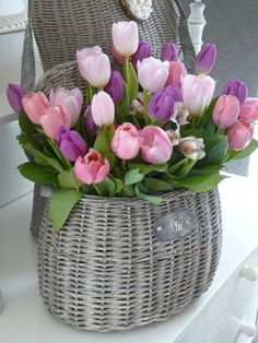 gio hoa tulip doc dao