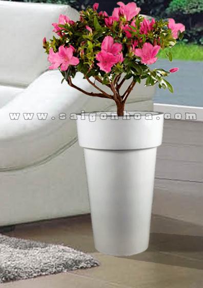 hoa do quyen chau dung 3