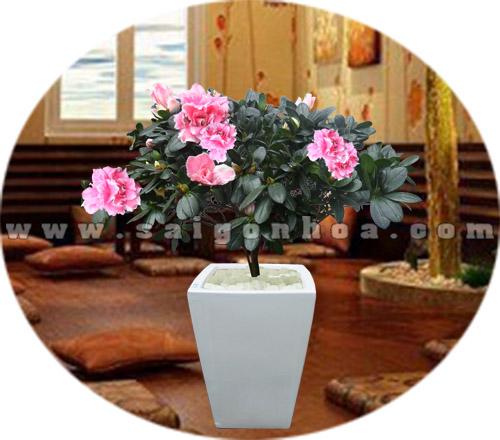 hoa do quyen chau dung 6