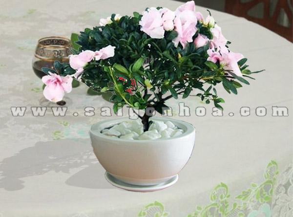 hoa do quyen hong 1