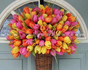 hoa tulip cac mau