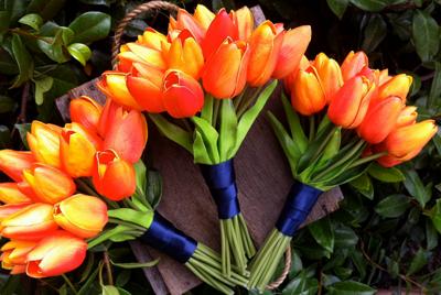 hoa tulip mau cam 5
