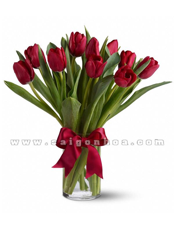 hoa tulip mau do 12