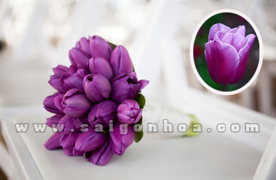 hoa tulip mau tim
