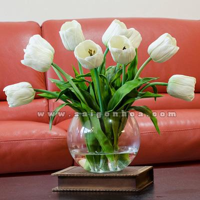 hoa tulip trang