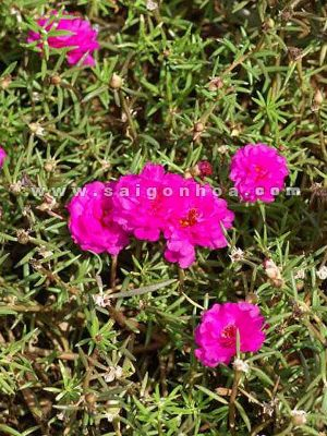 cay hoa muoi gio 2