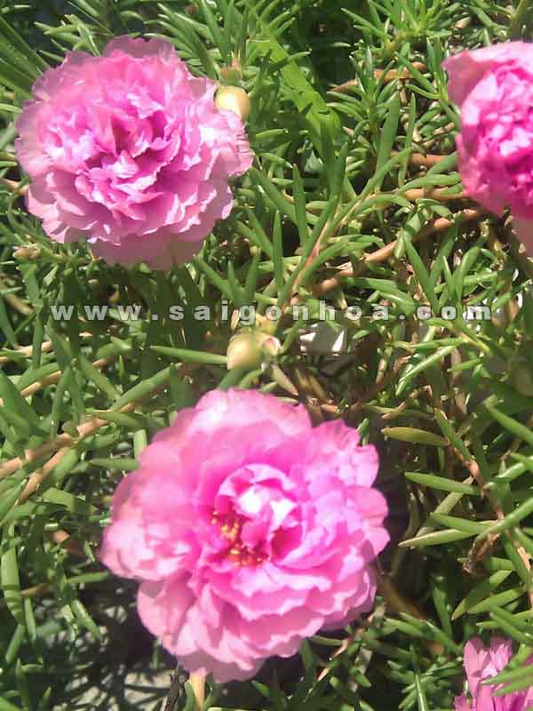 cay hoa muoi gio 3