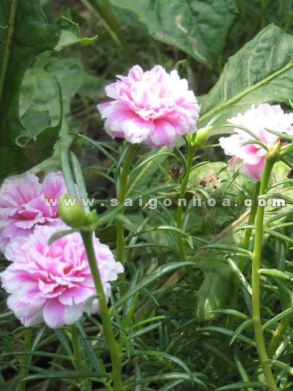 cay hoa muoi gio 4