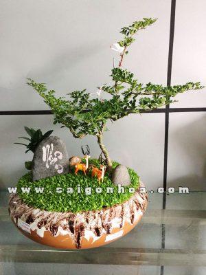 Tiểu Cảnh Cây May Mắn Vườn Thiên Nhiên