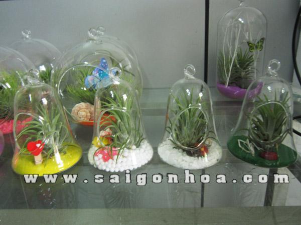 Chậu hoa sài gòn, một thiết kế mang phong cách từ những cái lọ kính đẹp