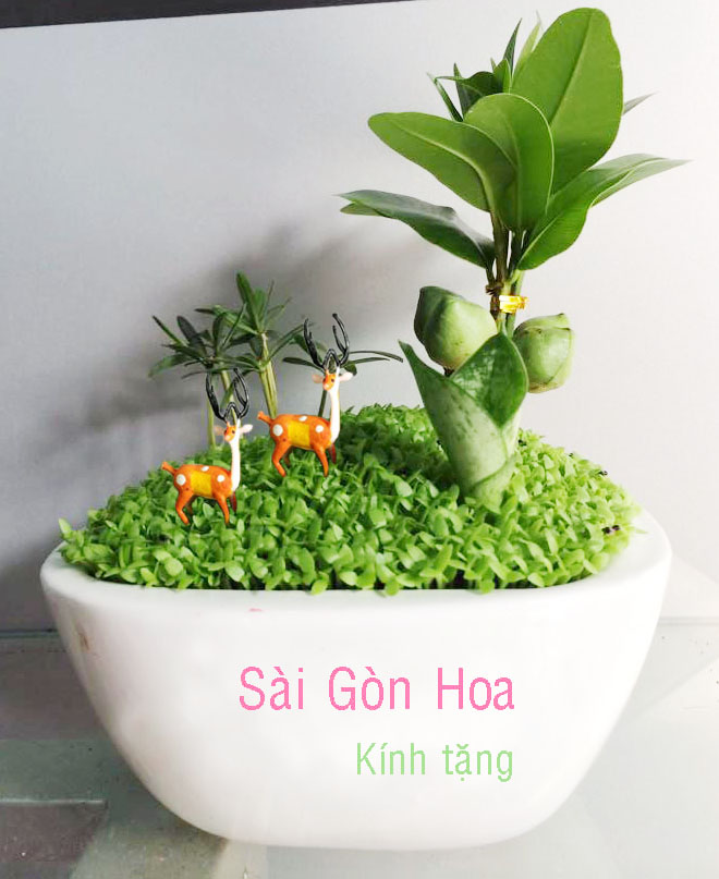 tieu canh qua tang chuong trinh giam gia 2 ngay duy nhat cho cay hoa canh tai sai gon hoa