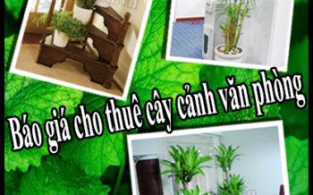 Bao Gia Cho Thue Cay Van Phong