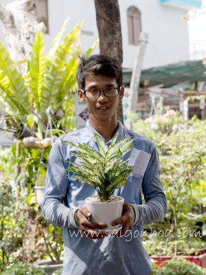 Chau Cay Ngoc Ngan De Ban