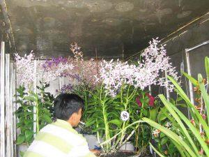 ban hoa lan dendro