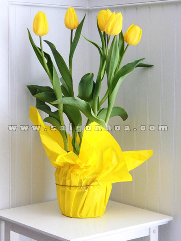 binh hoa tulip mau vang