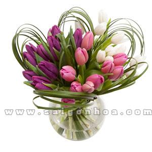 binh hoa tulip