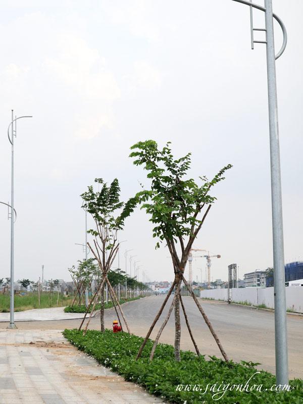 Cay Giang Huong 4