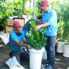 chăm sóc cây