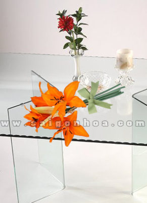 chau hoa lily cam 2