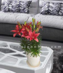 Chau Hoa Lily Do Dai Dien