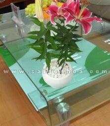 Chau Hoa Lily Hong Dai Dien