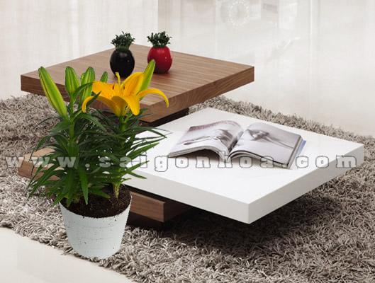 Chau Hoa Lily Vang 2
