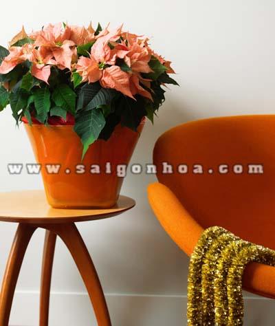 chau hoa trang nguyen 2