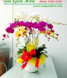 Chau Lan Ho Diep 9 Canh 1