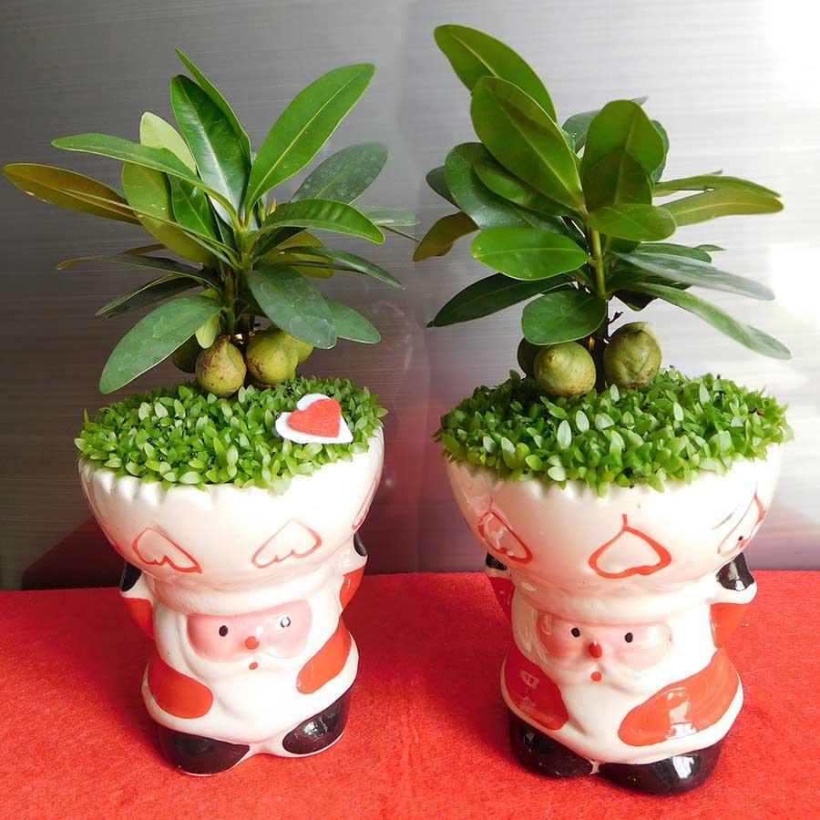 Chau May Man Tai Loc Ong Gia Noel