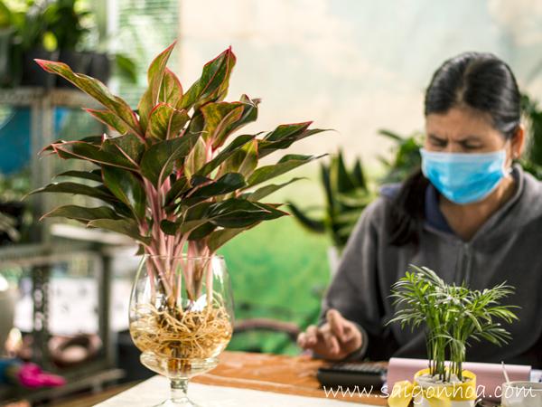 Chau Phu Quy Trong Nuoc De Ban