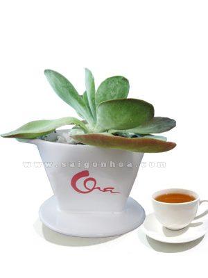 Chau Sen Da Tang Cha
