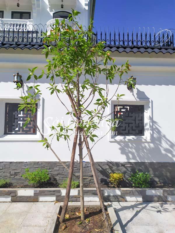 Cong Dung Cay Ngoc Lan Ta
