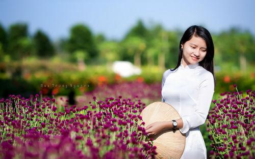 cuc bach nhat hoa mau tim