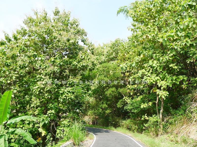 Gia Ty Cay Cong Trinh