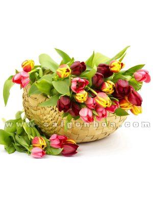gio hoa tulip 2
