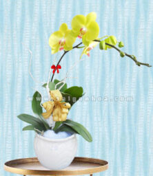 Ho Diep Vang Chau 1 Canh