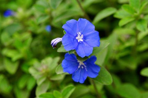 hoa cua cay thanh tu