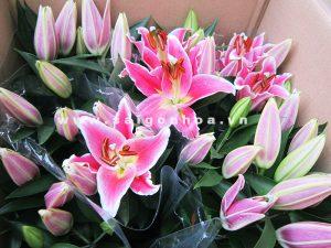hoa lily mau hong  6