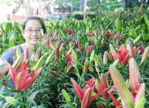 Hoa Lily Qua Tang