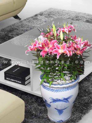 hoa lily thom dai dien