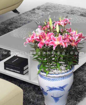 Hoa Lily Thom Dai Dien1