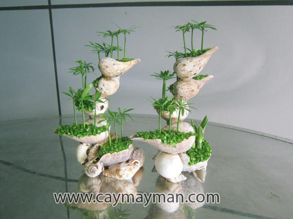 Hoa Oc May Man 2