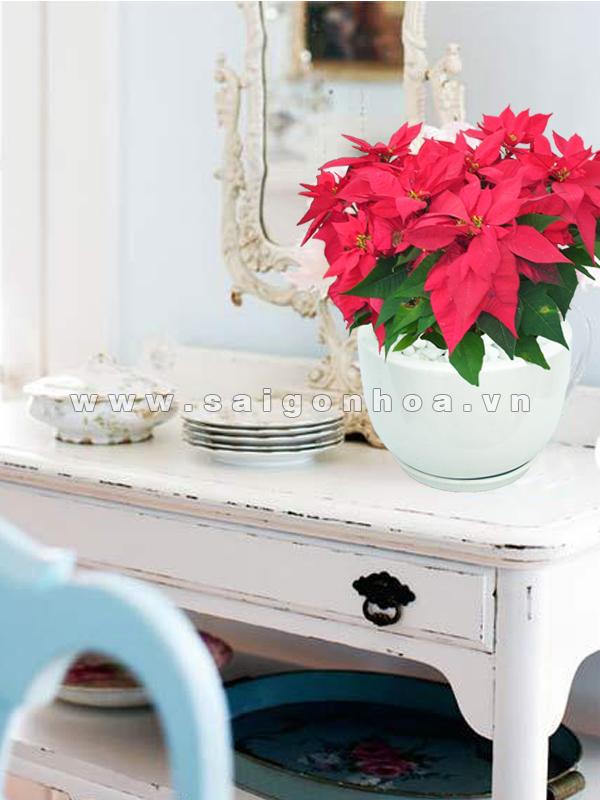 hoa trang nguyen (2)