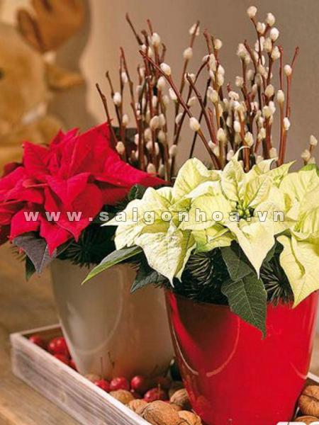 hoa trang nguyen (3)