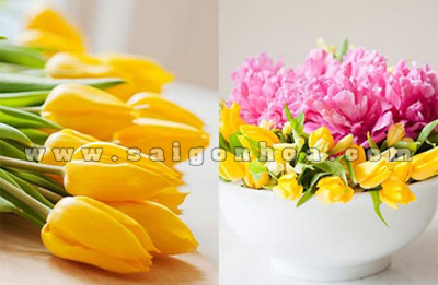 Hoa Tulip Mau Vang Trang Tri