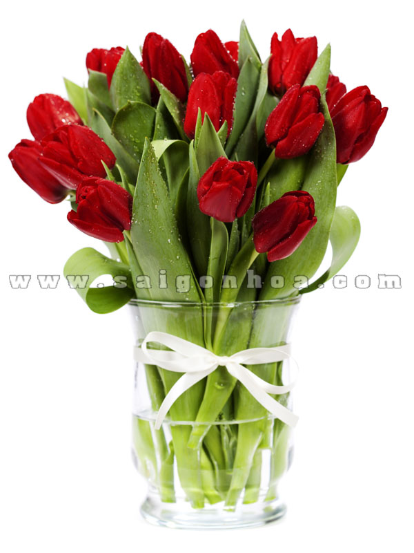 hoa tulip trong nuoc mau do