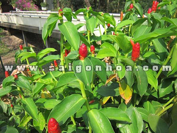 Hoa Va La Cay Phuc Loc Tho