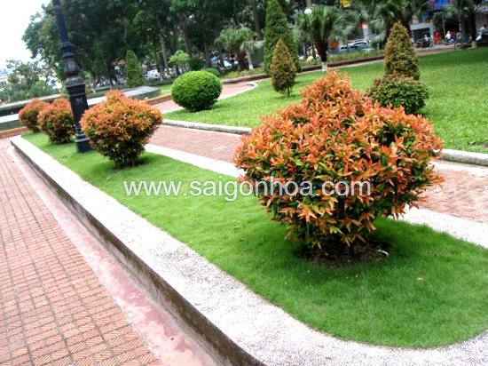 Phân loại cây xanh trong thiết kế cảnh quan